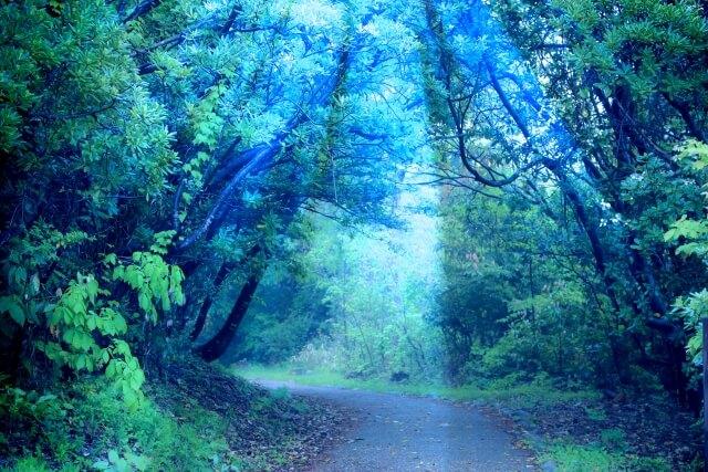 ドラクエ世界の神秘的な森